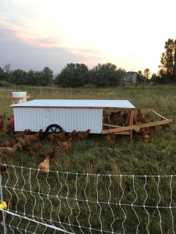 mobile chickshaw